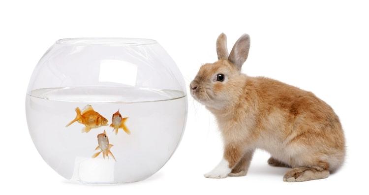 thỏ câu cá bằng cà rốt